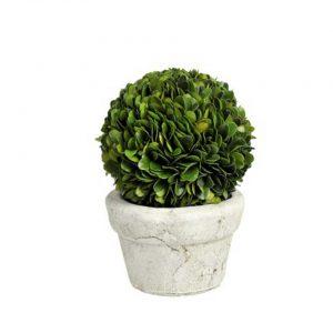 Buxusball in pot small