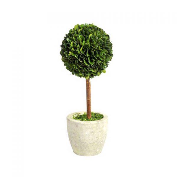 Buxusball on stem in pot medium
