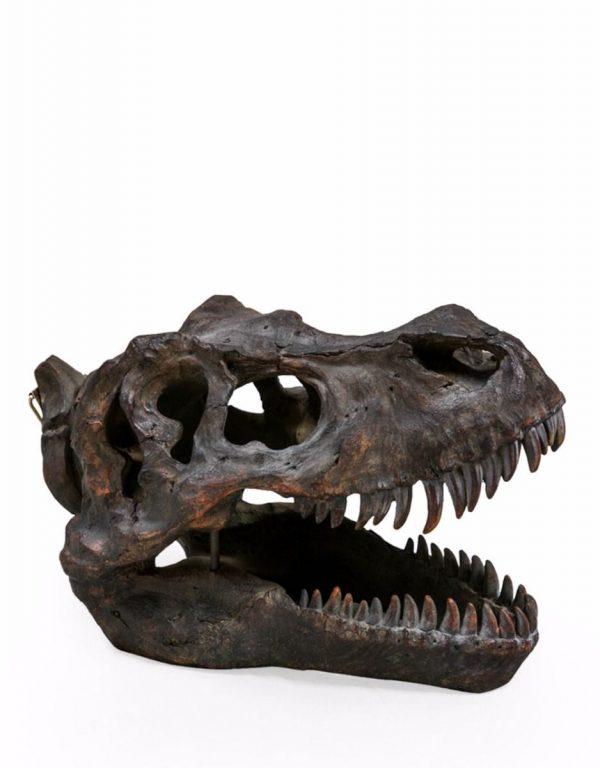 Large T-Rex Skull - Source Interiors