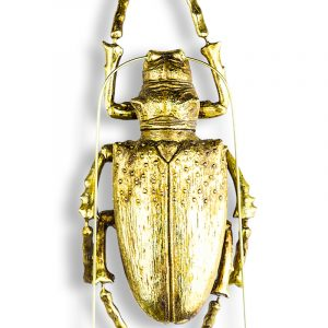 Medium Gold Beetle - Source Interiors
