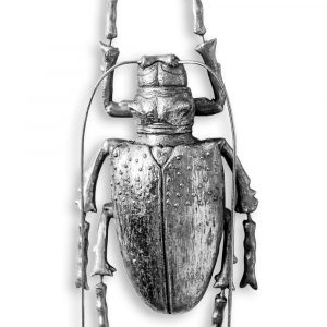 Medium Silver Beetle Wall Decor - Source Interiors