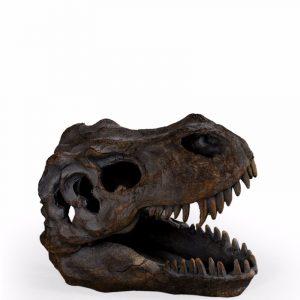 Small T-Rex Skull - Source Interiors