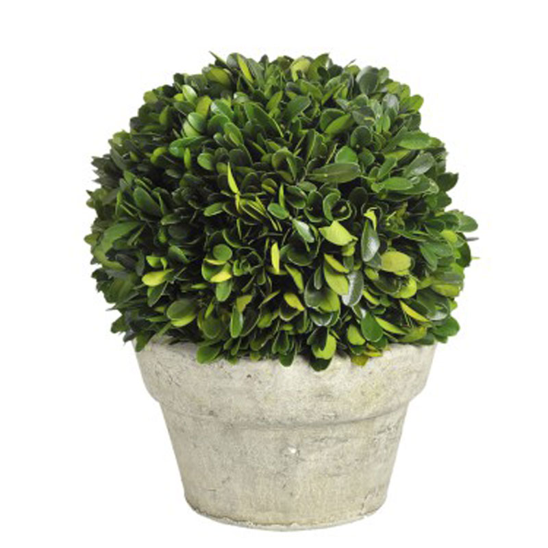 Buxusball in pot Medium - €69.00
