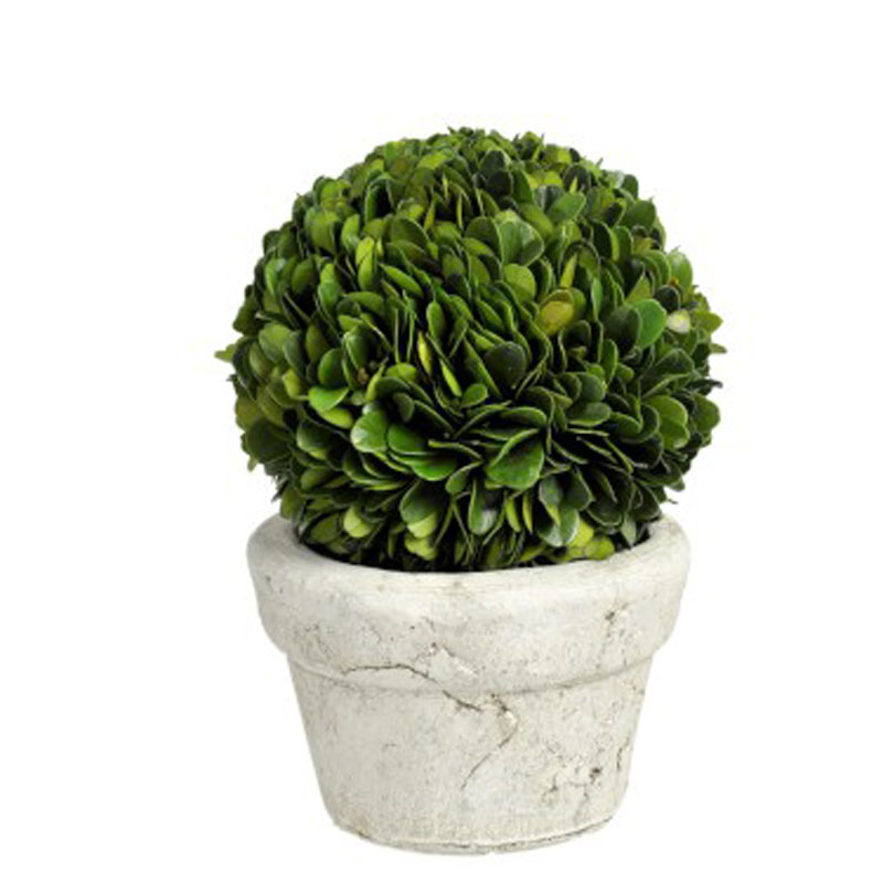 Buxusball in pot Small - €49.00