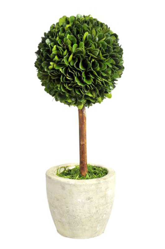Buxusball on Stem in Pot Medium - €59.00
