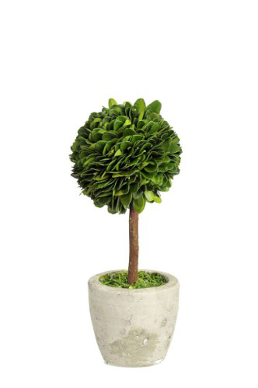 Buxusball on Stem in Pot Small - €39.00