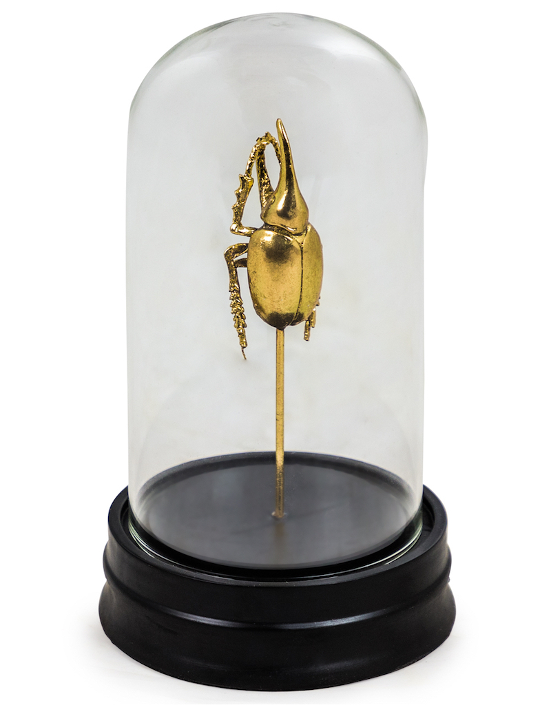 Gold Beetle Specimen 15 in Glass Dome €39.00