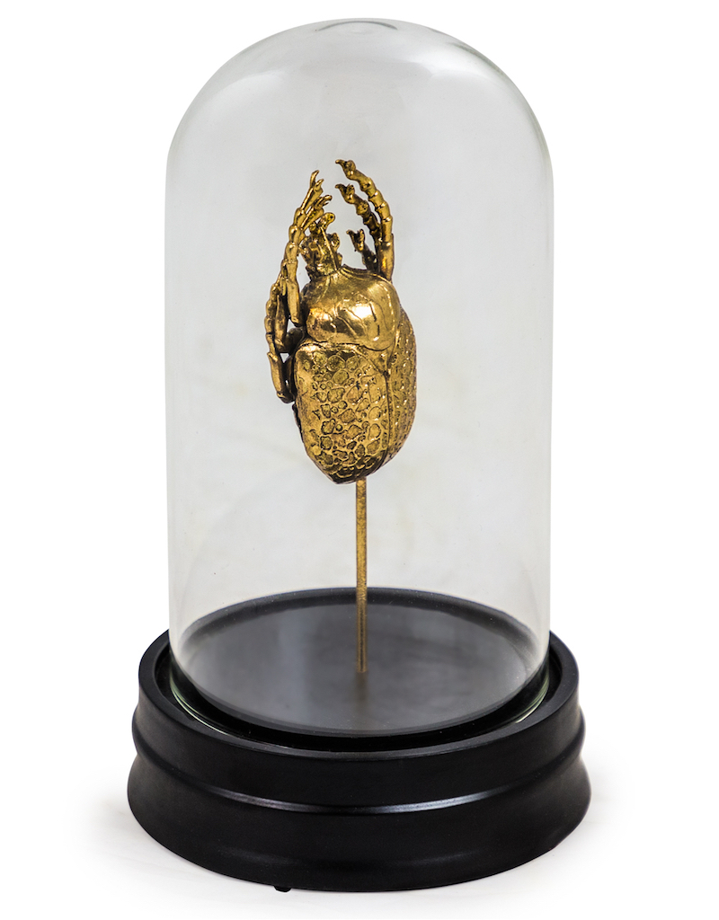 Gold Beetle Specimen 16 in Glass Dome €39.00