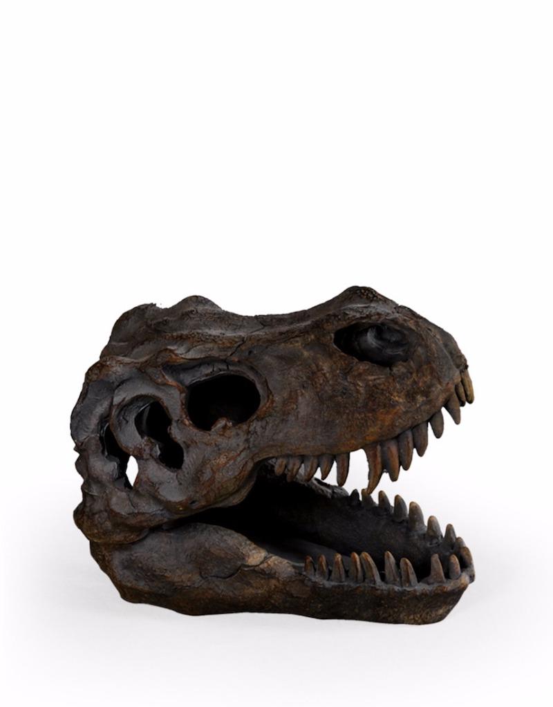 T Rex Skull €35.00