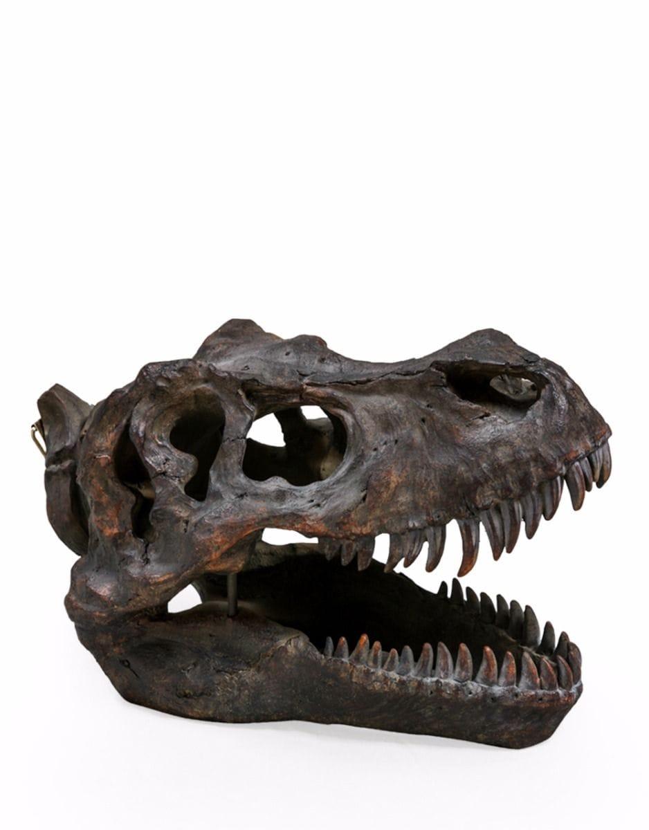 Large T-Rex Skull - €95.00 | H26xW21xD36cm